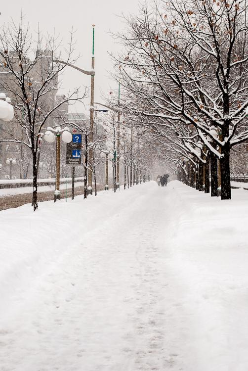 Winter in Ottawa, ON (977)