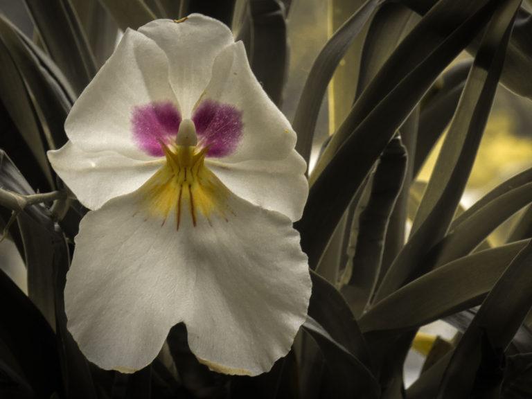 Flower Study (1157)