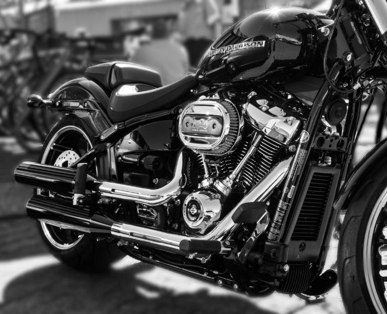 Harley (276)