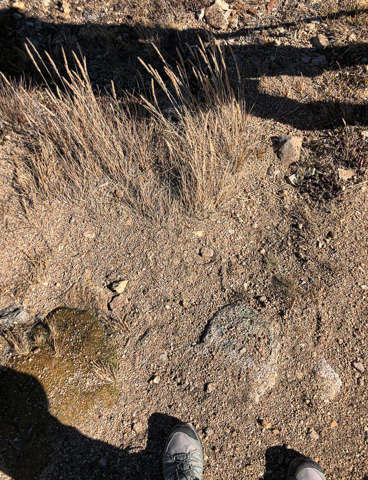 Trail dirt