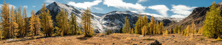 Pyramid Mountain panorama with Fall larches