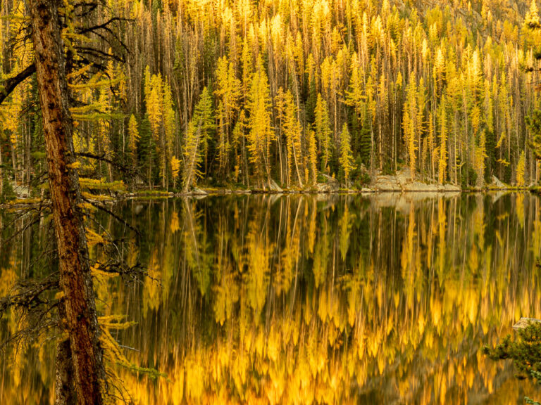 Reflections in Quiniscoe Lake