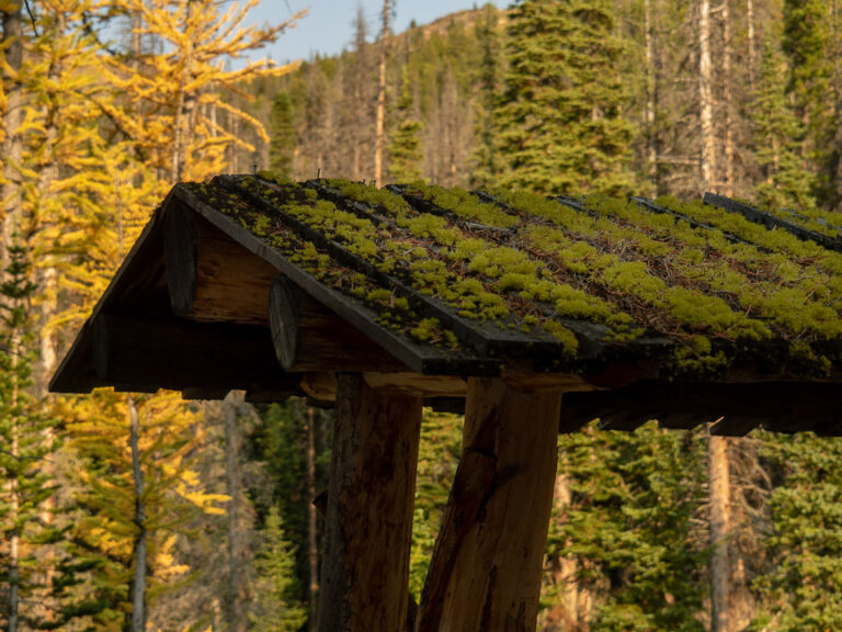 The roof of the wood pile