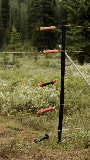 Electric Fence To Keep Bear Outside Camp (226)
