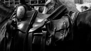 Saddle (310)