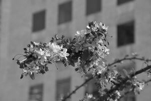 Blossom, San Francisco