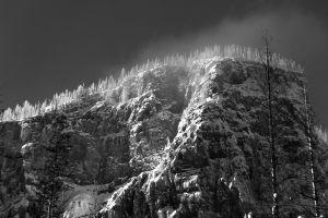 Snowy Cap (0555)