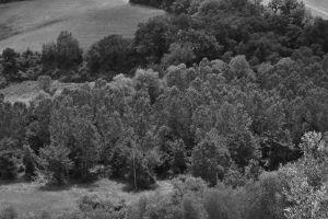 Montepulciano Trees