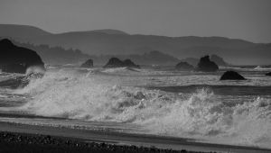 Oregon Coast (1384)
