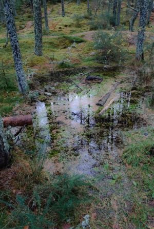 Forest Pool (712)