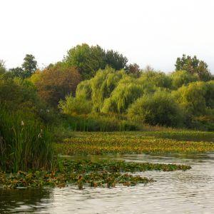 Trout Lake (486)