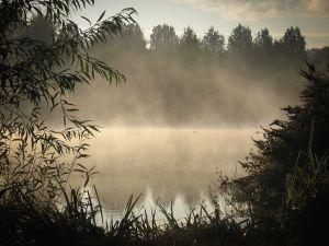 Morning Mist (515)